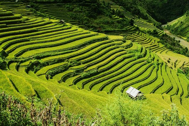 David Vidrih - Vtisi iz Vietnama